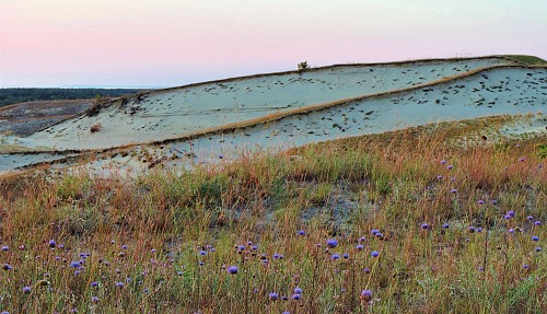 Curonian Spit Harmonious existence between invasive flowers and the dunes. Sustainability / sustainable methods Full rights